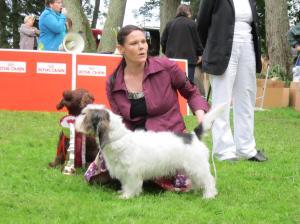 Paku in Finnish Basset Glub special show. BIS Hunting dog