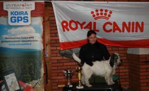 Paku in Basset hunting shampion competition 2011 3.plase