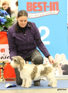 Best puppy show in Helsinki. Cevi was Group 6 2. Place