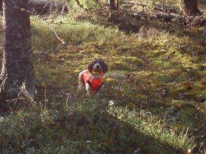 Cevi hunting
