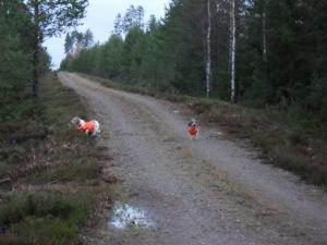 Cevi and Vani hunting
