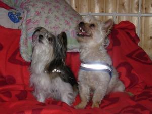 My morher dogs Bezi and Hertta