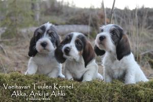 Vaeltavan Tuulen A- Pentue Akka, Anki ja Aihki Photo: Jaana Honkanen