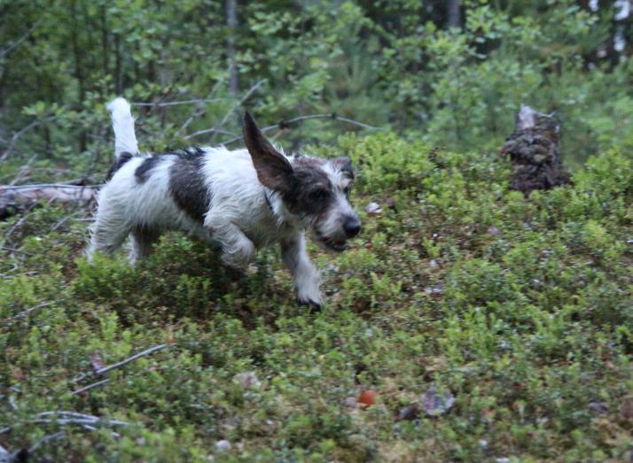 Lempi. Metsällä on hauskaa.  Photo: S-L.Y.
